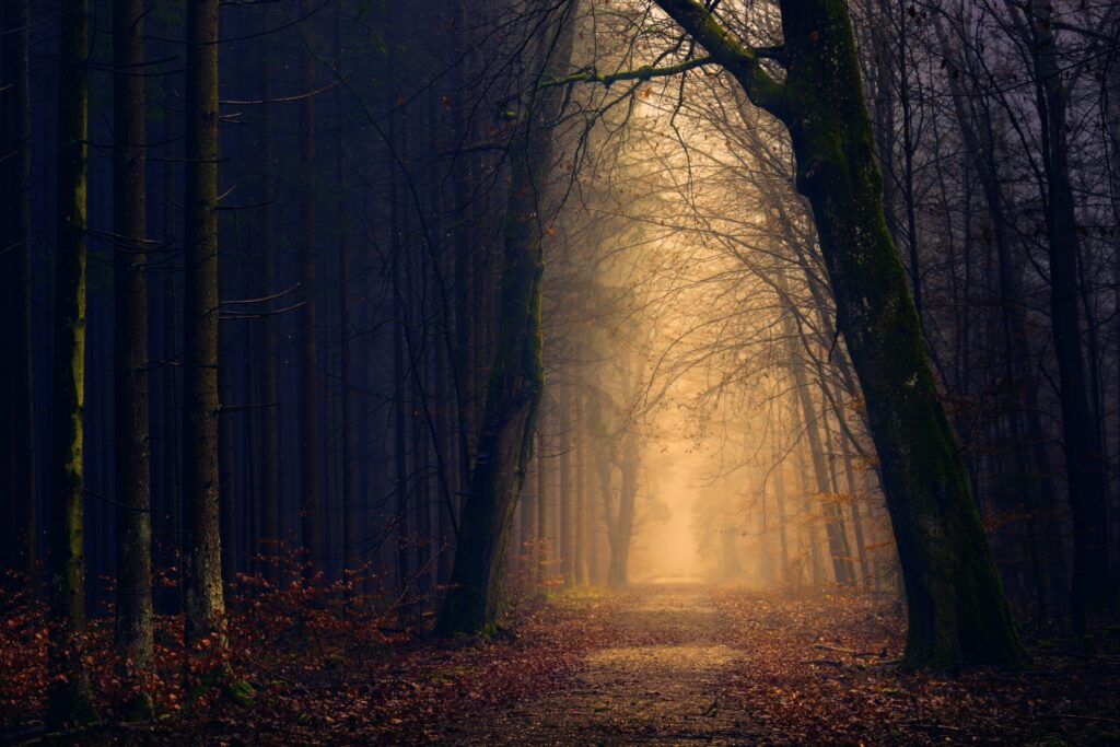 spooky forest path
